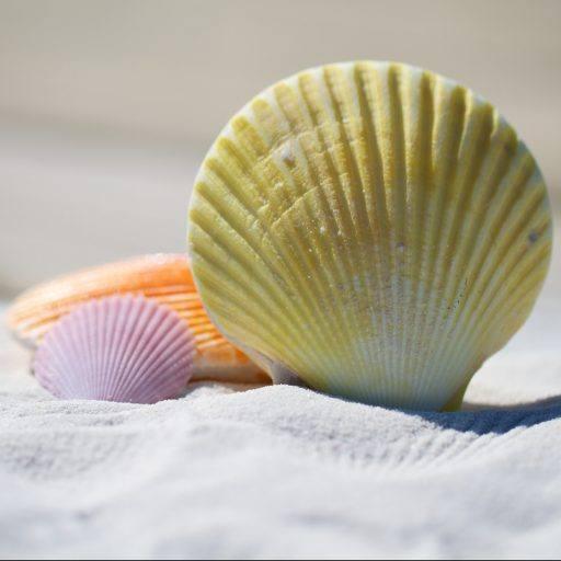Massage und ihre positive Wirkung - cropped cropped muscheln pixabay