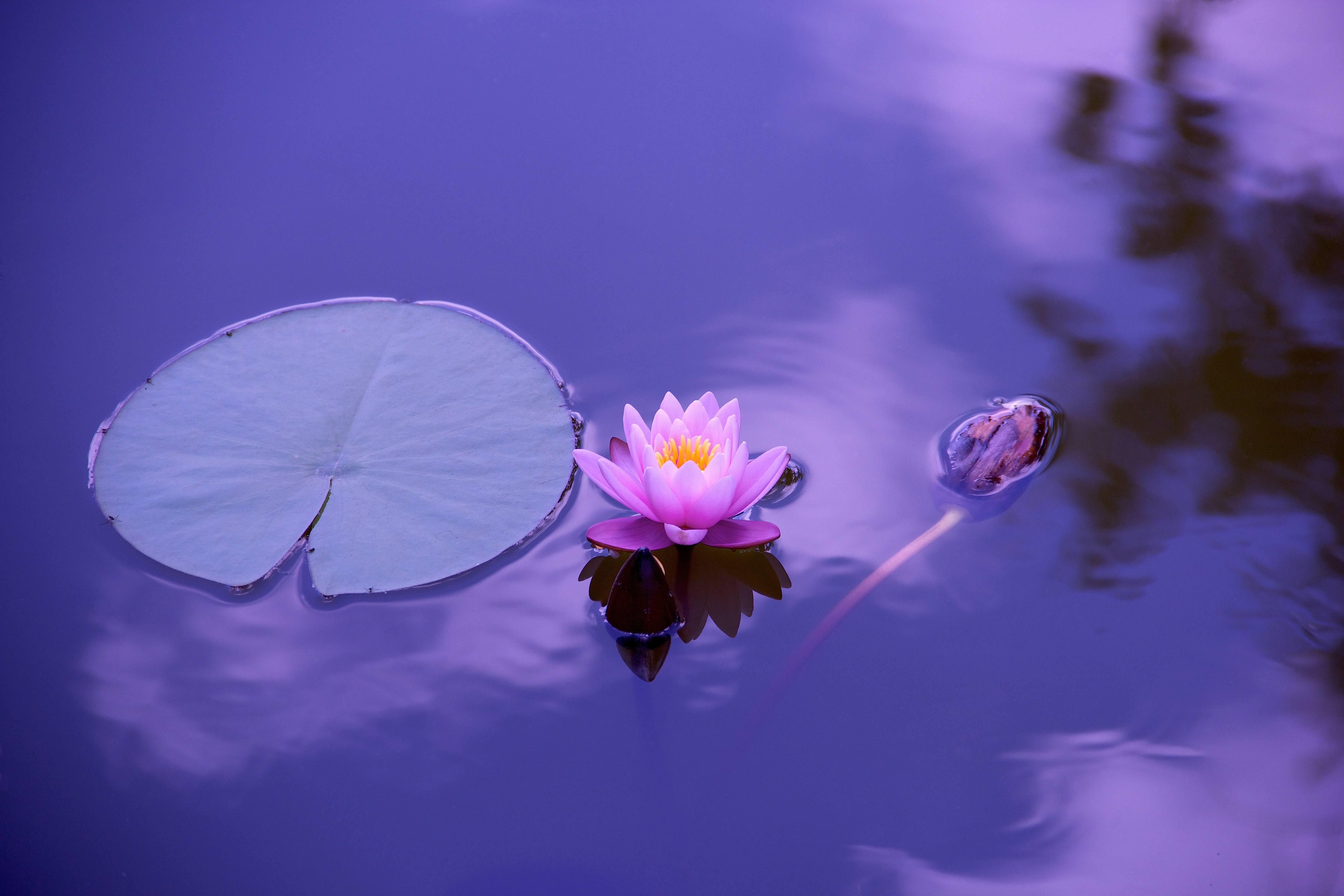 Wirbelsäulentherapie nach Breuss - lotus 1205631