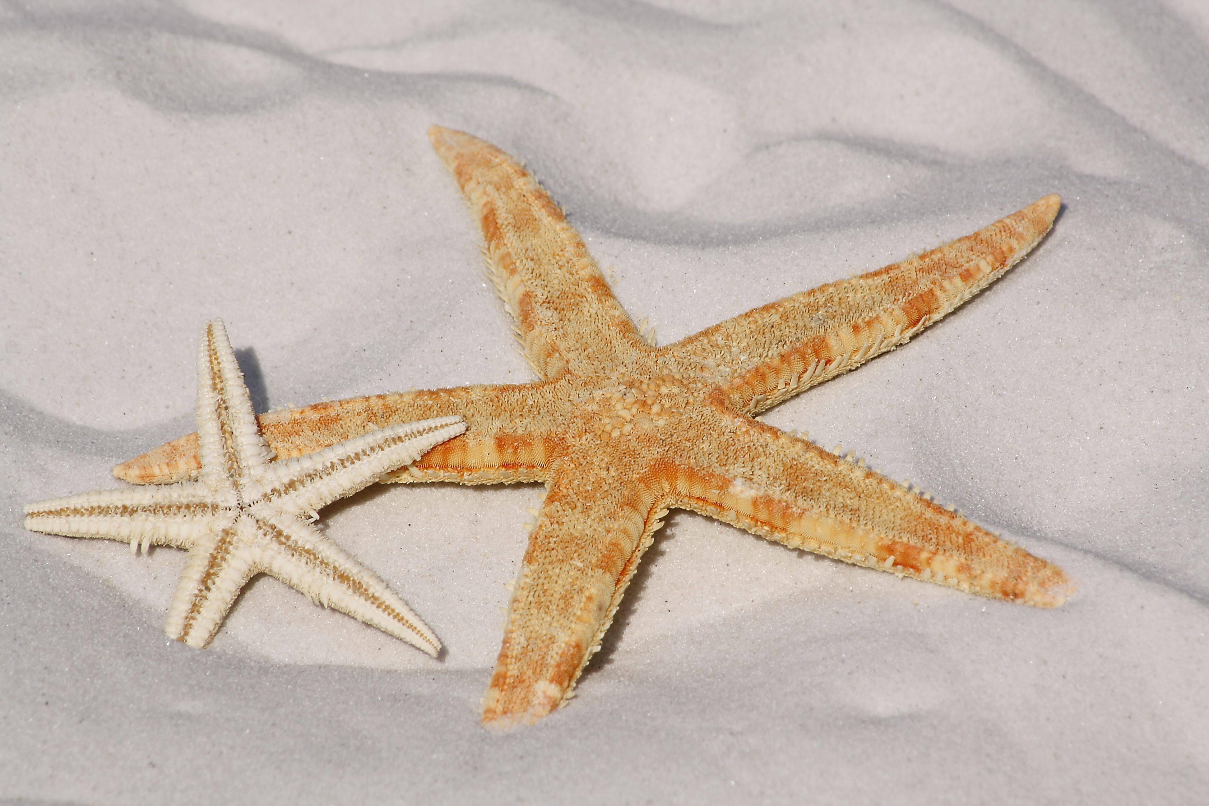 Zeit für's-Ich - starfish 343791