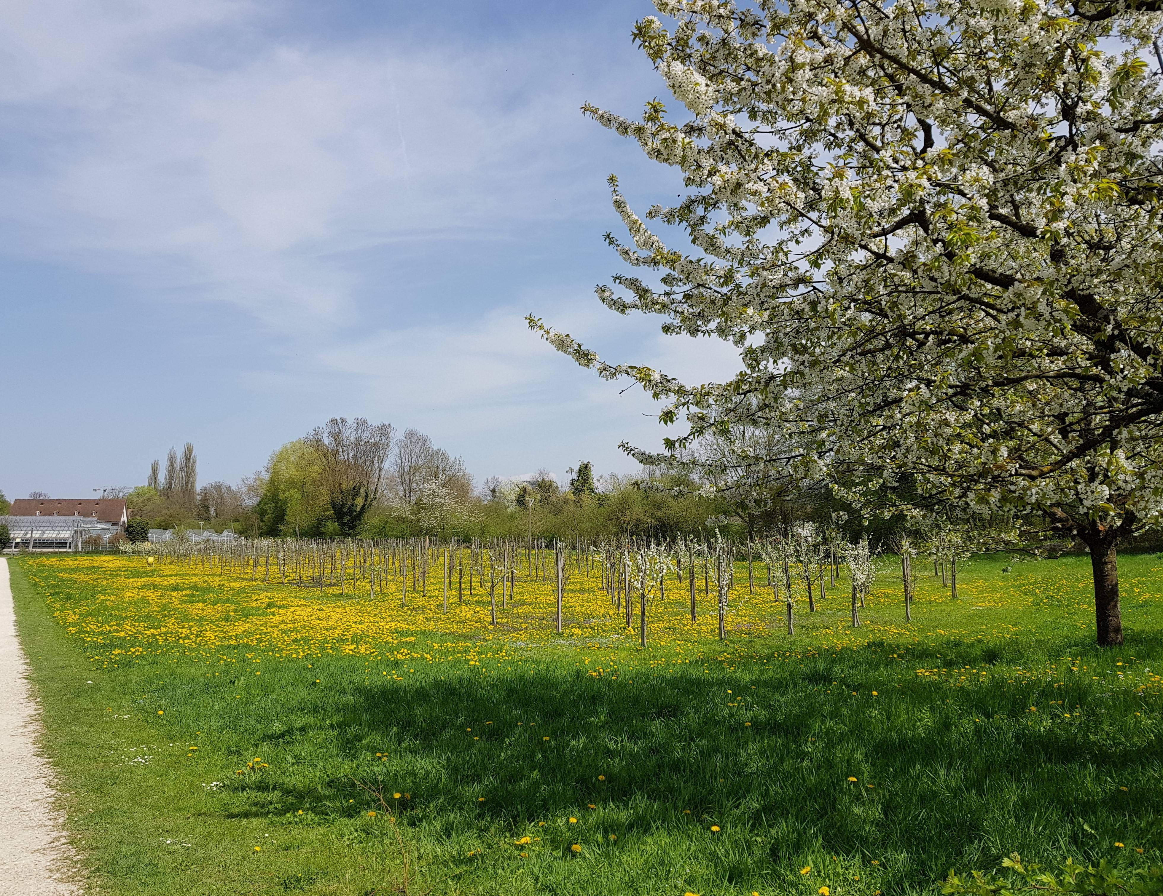 Heuschnupfen - Behandlungsmöglichkeiten - zumbihl florence park im gruenen1