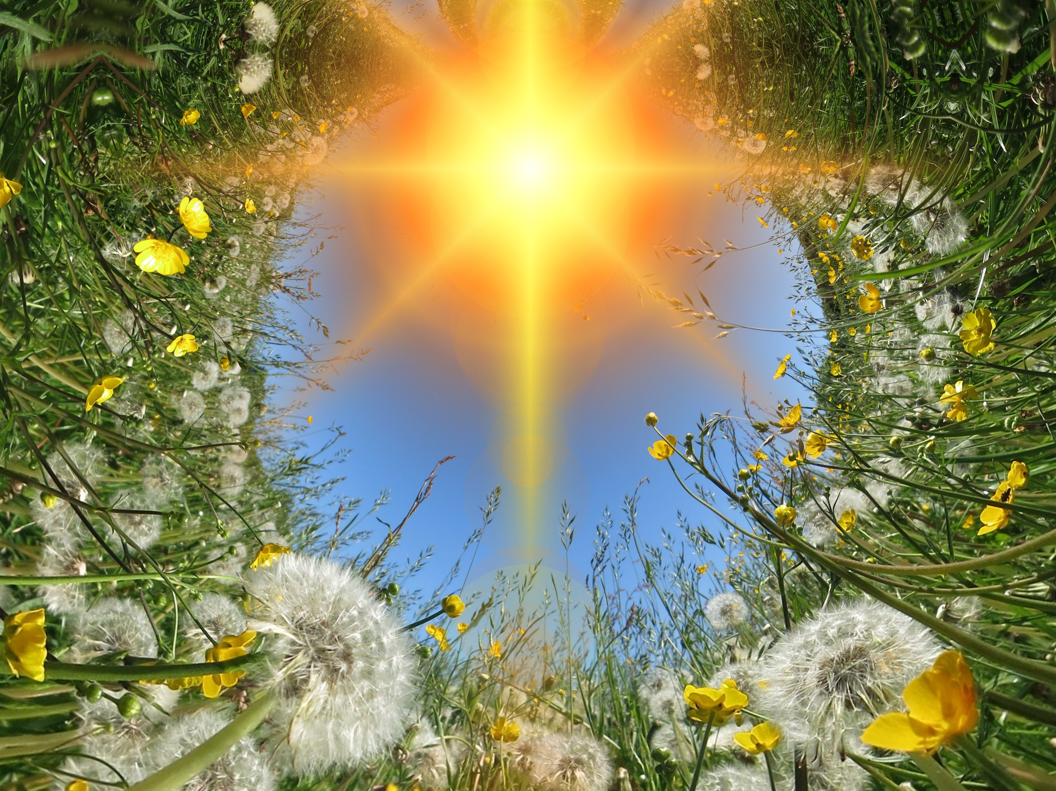 Lichtimpulse 7 - Veränderung - dandelions 419858