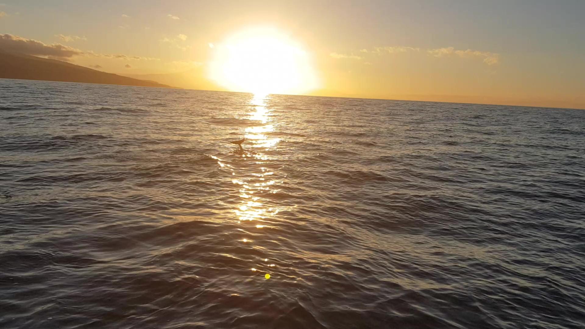 La Gomera Seminarwoche – Delfine und Wale