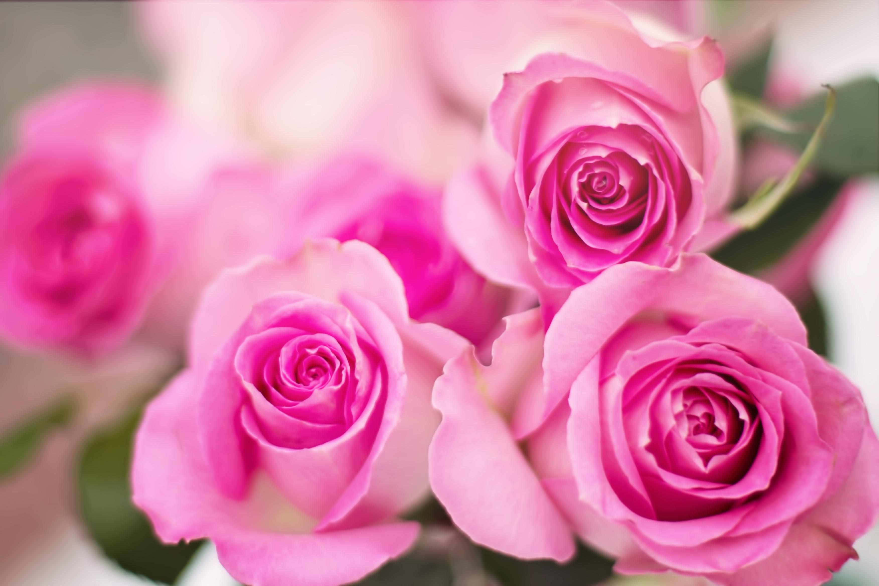 Pinke Rosen - Zeichen der Selbstliebe Florence Zumbihl